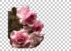婚礼花卉背景,婚礼仪式用品,花卉,蔷薇,花瓣,开花,切花,插花,花卉