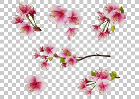 春花,普鲁斯,天竺葵,花梗,人造花,蛾兰,分支,春天,粉红色,花瓣,植