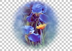 婚礼春花,切花,种子植物,水彩画,春天,番红花,虹膜家族,花瓣,紫色