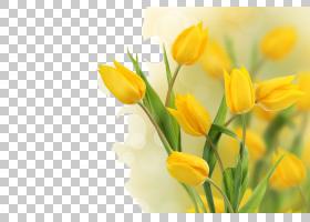 春花,植物茎,春天,野花,百合家族,花瓣,植物,粉红色的花,玫瑰,红