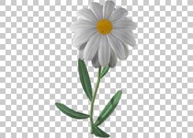 花卉剪贴画背景,甘菊,梅草,非洲菊,野花,紫菀,植物茎,玛格丽特黛