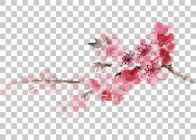 婚礼春花,细枝,春天,切花,花瓣,植物,分支,樱花,粉红色,服装设计