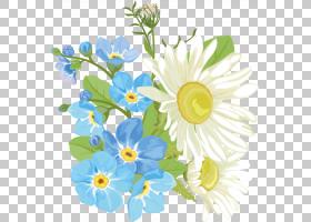 花卉剪贴画背景,花卉,花束,牛眼雏菊,插花,黛西,一年生植物,野花,