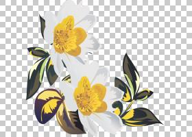 花卉剪贴画背景,花卉,黄色,传粉者,花瓣,植物群,植物,主题,郁金香