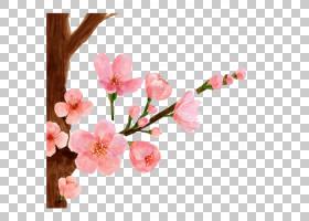 婚礼春花,花卉设计,细枝,插花,分支,花卉,切花,花瓣,花,植物,绘图