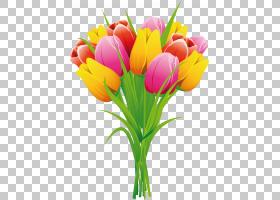 春花,花卉,植物茎,插花,切花,种子植物,百合家族,花卉设计,黄色,