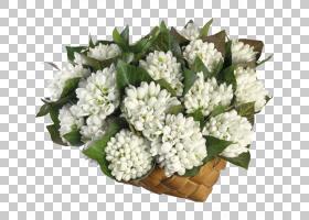 春花,草本植物,花卉,花束,插花,切花,花卉设计,花盆,植物,雪滴,冬