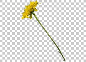 花卉剪贴画背景,雏菊家庭,植物群,黄色,植物,花,植物茎,切花,蒲公