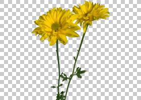 花卉剪贴画背景,黄色,蒲公英,玛格丽特黛西,菊花冠室,向日葵,Cham
