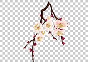 春花,樱花,花卉设计,细枝,插花,分支,花卉,春天,树,开花,粉红色,