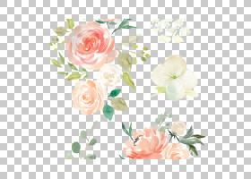 春花,开花,玫瑰秩序,花卉,插花,植物,玫瑰家族,粉红色,春天,牡丹,