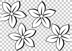 黑白花,视觉艺术,植物茎,传粉者,面积,切花,线路,对称性,花瓣,叶,