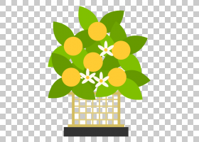 春花,水果,花盆,花卉,黄色,春天,切花,植物,桃子,樱花,花,Tachiba
