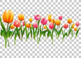 春花框,花卉,百合家族,种子植物,芽,植物茎,花瓣,植物,拼贴相框,