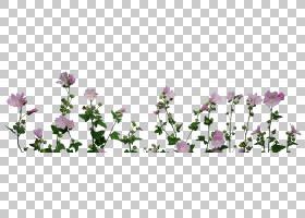 春花,花卉,草,植物茎,紫罗兰,法国薰衣草,郁金香,花卉设计,春天,
