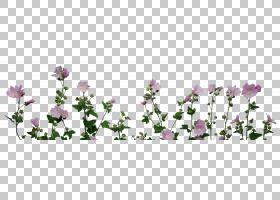 春花,花卉,草,紫罗兰,法国薰衣草,花卉设计,春天,薰衣草,草族,切