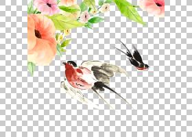 水彩花卉背景,喙,分支,花,花卉设计,传粉者,花瓣,植物群,植物,卡