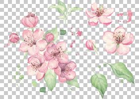 水彩花卉背景,插花,樱花,玫瑰家族,分支,花瓣,植物,植物群,开花,