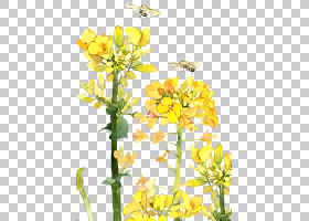 春花,花卉设计,植物茎,切花,分支,插花,花卉,黄色,传粉者,花瓣,春