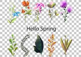 水彩花卉背景,花卉,插花,花盆,花瓣,叶,植物群,植物茎,切花,绘画,
