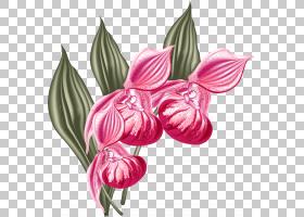 粉红色花卡通,[医]扁桃花,种子植物,蛾兰,洋红色,植物群,粉红色,