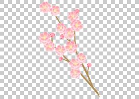 春花,细枝,植物茎,蛾兰,春天,分支,植物,开花,粉红色,花瓣,图书插