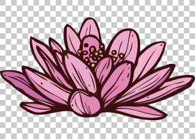 春花,花卉,传粉者,植物群,昆虫,蝴蝶,紫色,花,粉红色,草本植物,洋