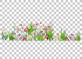 春花,花卉设计,野花,草,切花,草甸,春天,花瓣,植物,花,植物,计算