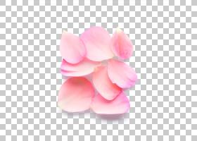 粉红色花卡通,桃子,玫瑰家族,花,花瓣,粉红色,玉子,克里斯蒂安・