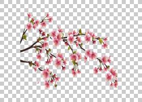 春花,切花,植物茎,树,细枝,花瓣,春天,植物群,植物,分支,粉红色,