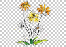 黑白花,花卉,牛眼雏菊,黛西,传粉者,植物群,视觉艺术,黑白,线路,