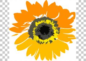 黑白花,黑白,圆,雏菊家庭,黄色,花瓣,向日葵,植物群,植物,向日葵,
