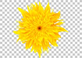黑白花,黑白,大丽花,切花,雏菊家庭,花瓣,向日葵,葵花籽,蒲公英,