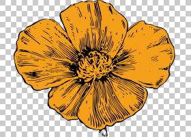 黑白花,黑白,橙色,黄色,花瓣,向日葵,植物群,植物,雏菊家庭,颜色,