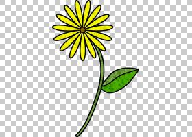 黑白花,黑白,线路,切花,黄色,树,植物群,植物,叶,花瓣,罂粟,郁金