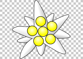 黑白花,黑白,线路,切花,黄色,花瓣,对称性,叶,植物群,线条艺术,圆