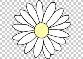 黑白花,黑白,线路,白色,切花,黄色,圆,花瓣,对称性,叶,植物群,植