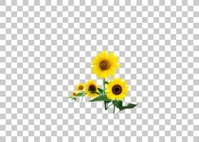 黑白花,黑白,黛西,黄色,花卉,雏菊家庭,花瓣,向日葵,植物,数据,葵