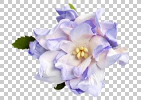 蓝鸢尾花,虹膜,人造花,飞燕草,绣球花,栀子,花束,丁香,薰衣草,植