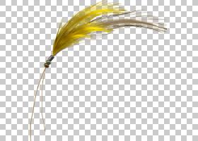 黄色背景,线路,材质,绘图,资源,免费,羽毛,黄色,