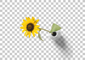 黄色背景,黛西,雏菊家庭,静物摄影,花瓣,向日葵,葵花籽,植物,花,