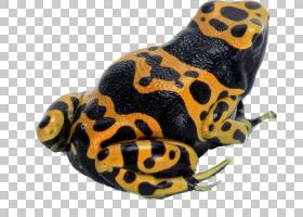 金箭,昆虫,传粉者,蝌蚪,欧洲树蛙,箭头,黄带毒镖蛙,蓝毒飞镖蛙,金
