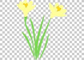 黄花梗植物水仙,郁金香,植物茎,花瓣,水仙,植物,花梗,花,黄色,湿