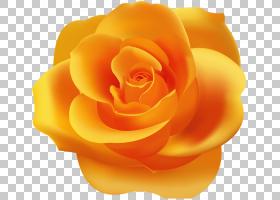 花卉剪贴画背景,切花,桃子,关门,玫瑰秩序,花瓣,玫瑰家族,花,蓝色