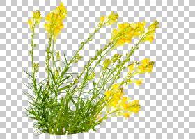 花卉背景,花卉设计,草,植物茎,切花,分支,花,黄色,花盆,植物群,Li