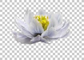 花卉剪贴画背景,切花,花瓣,植物,绿色,花,黄色,红色,白噪声,女人,