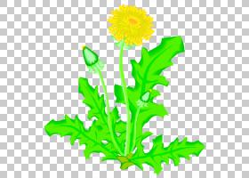 家谱背景,花卉设计,叶菜,植物茎,切花,雏菊家庭,黄色,树,花盆,向