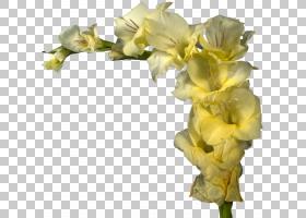 花卉背景,插花,虹膜家族,普通雏菊,摇摆,花束,花瓣,植物,鸢尾科,