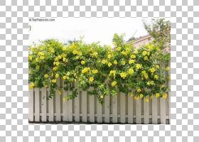 栅栏卡通,室外结构,栅栏,尖桩栅栏,植物,阿拉曼达,多年生植物,灌