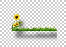 绿草背景,矩形,花卉设计,草,花瓣,雏菊家庭,黛西,花盆,向日葵,植